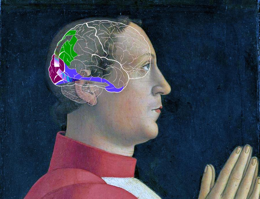 Строение мозга. Зоны цветовох ощущений.